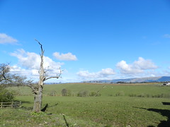 Countryside View from Stepps, Glasgow, April 2017 (allanmaciver) Tags: stepps glasgow countryside old tree clouds fields farmer smells birds blackbird pigeons allanmaciver