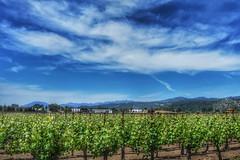 Viñedos - Sattui vineyards - Napa Valley (Nicolas Solop) Tags: grapefield napa valley napavalley valledenapa california estadosunidos unitedstates viñedos viñedo sattui winery vsattuiwinery napavalleywines vino wine vinosvalledenapa napavalleyphotos napavalleyphotographs napavalleytravelphotos napavalleytravel fotosdelvalledenapa fotografiasdelvalledenapa valledenapafotografiasdeviaje viña mosto orujo vinicultura viniculture marc vineyard enologia oenology uva grape campo field nsoloptag wines moscato oporto bodega winecellar winesofcalifornia vinosdecalifornia cabernetsauvignon chardonnay merlot pinot noir sauvignon blanc sauvignonblanc syrah zinfandel viticultural americanwine vinoamericano barrica