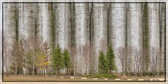 Spring Parade of Trees (Note-ables by Lynn) Tags: trees silos collingwood ontario spring