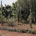 Jardin Botanico UNAM 20