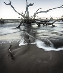 DSC05875 (dgrano20) Tags: big talbot island state park sonya7ii tokina1116mm beach