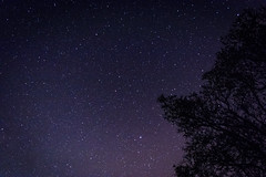Stars (Nogegg) Tags: nature new spring sun night stars tree dark darkness amateur cold warm first time trees summer away sky white black beginner dslr alone dream