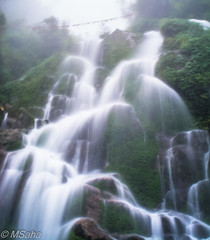 Waterfall in misty weather in Gangtok (MrSaha) Tags: waterfall misty weather gangtok nikon d52000 dslr panaromic tall wide nature landscape manual earth top bright dim shadow light around view look travel happy life lively adventure globe world lonely peace peaceful calm quiet moment sharp clear soft beautiful capture red blue green color colors vivid vibrant legend evening lowlight long exposure hill mountain rocky rock tree leaves branches plants flower root grass hay lake water river pond reflection stream wet flow ocean fountain