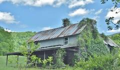 Abandoned - decay setting in (stevelamb007) Tags: vines smokymountains northcarolina rural farm abandoned house home building decay deterioration stevelamb nikon d7200 nikkor18200mm