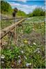 Branchline in spring .............. (Alan Burkwood) Tags: branchline flora floweres rust rails