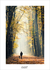 oops...wrong season... (Zino2009 (bob van den berg)) Tags: autumn 2016 november passant passenger pedestrian walk dog forest lochem magic kingdom lars perfect light larspiration elements leaves yellow fall carpet early morning workshop zino2009 dutch trees netherlands woman chill colors explosion beeches
