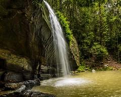 serenity falls (andrew.walker28) Tags: serenity buderim forest park queensland australia waterfall rainforest falls