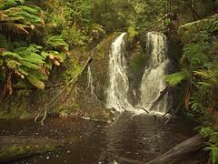Hogarth Falls (nisudapi) Tags: 2017 australia tasmania strahan waterfall hogarth hogarthfalls