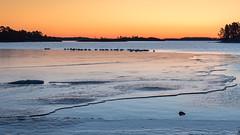 20170330_063301.jpg (jussidimitrijeff) Tags: bird vuosaari helsinki ice sea