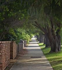 Pavement (Wajahat Mahmood) Tags: pedestrian pavement footpath green tunnel perth wa westernaustralia nikond810 googlenik trees sidewalk