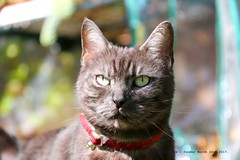 Happy Caturday..... (law_keven) Tags: cats cat animals mammals london england morden photography pets pet garden grass sunshine caturday