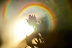Light & Dreams (fxdx) Tags: light elicar f28 m42 manual a7 ilce7 flare bokeh dreams 135mm prime
