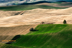 Light (Objects1000) Tags: palouse layers scenic scenery landscape green colors nature easternwashington patterns rollinghills meadow hills vibrant valley light oakesdale washington unitedstates us