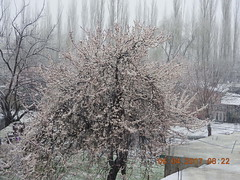 DSCN2306[1] (drmohammad_ibrahim200760) Tags: heavy snow fall skardu month april