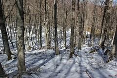 faggi innevati (Roberto Tarantino EXPLORE THE MOUNTAINS!) Tags: monte cornacchia anticima nord puzzillo abruzzo cresta 2000 neve snow inverno primavera aprile campofelice campo felice valle morretano