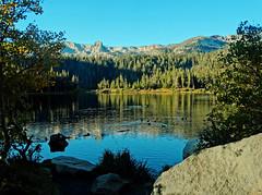 Breakfast Swim, Twin Lakes, CA 2016 (inkknife_2000 (7.5 million views +)) Tags: mammothlakes twinlakes dgrahamphotousalandscapesblue skystill watercaliforniasierra nevadamountainsalpine lakes waterreflection crystalcrag ducks ducksonwater waterfowel