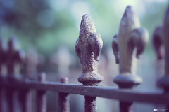 Top of the railing (technodean2000) Tags: top railing fence nikon d610 lightroom uk dof