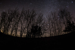 Night Sky in Baldwin (Phil Roeder) Tags: jacksoncounty iowa canon6d canon15mmf28 canonef15mmfisheye trees silhouette stars night