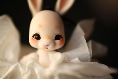 Tibuni (Blublue) Tags: blublue doll bjd ball jointed bunny rabbit cocoriang tobi white macro lens ldoll enchanted eyes glass