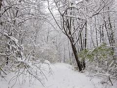 IMG_2828 (sjj62) Tags: s90 snow snowscape lith lakeinthehillsil winter winterscape