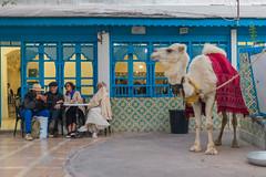 Le Safsaf - Tunis (Mashhour Halawani) Tags: tunis tunisia lamarsa safsaf travel risetunisia discovertunisia