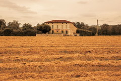 _Q9A5410 (gaujourfrancoise) Tags: france southwest sudouest charente fields champs été summer ocher ocre