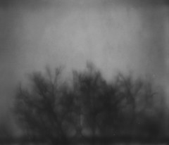 tree through a thunderstorm, 2017 (-1255-) Tags: mendenhall 1255 tree blackframe spectra project impossible image1200 polaroid