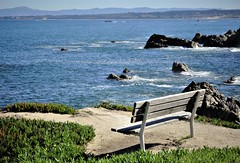Bench at the  Pacific Ocean. (France-♥) Tags: banc 172 pacificocean pacificgrove eau water californie bleu blue