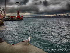 Lonely Seagull (`ARroWCoLT) Tags: hdr tonemapped cloud bulut cameraphone mobiography lumia1020 nokia weather seascape offshore port liman landscape istanbul boğaziçi single seagull martı lonely alone yalnız bosphorus sea deniz water seashore sky