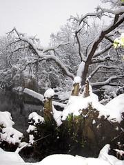 IMG_2842 (sjj62) Tags: s90 snow snowscape lith lakeinthehillsil winter winterscape