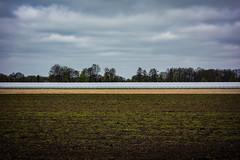 Gütersloh (mai.qu) Tags: bielefeld gütersloh country life landwirtschaft land felder fields germany ostwestfalen square