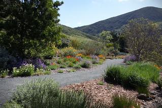 Leaning Pine Arboretum - Native Pathway