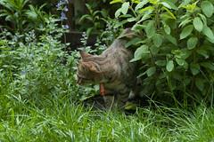 2007-05-15-0029.jpg (Fotorob) Tags: okkie thuis tuin huisdieren nederland dieren zuidholland rotterdam