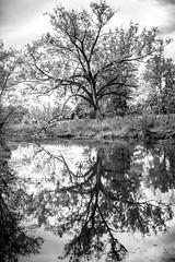Autumn Sweater (Thomas Hawk) Tags: america forestpark missouri mo stlouis usa unitedstates unitedstatesofamerica bw reflection tree trees fav10 fav25 fav50