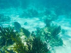 Version 2 snorkeling Costa Maya Mexico (bermudafan8) Tags: 2017 spring break bermudafan8 mexico snorkel caribbean water ocean blue