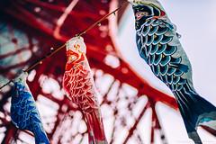 2014_04_29_TokyoTower_Koinobori_005_HD (Nigal Raymond) Tags: japan tokyo 日本 tokyotower 東京 東京タワー 写真 koinobori 鯉幟 a7r cooljapan nigalraymond wwwnigalraymondcom metabones ナイジャル レイモンド