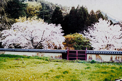 Japon 2014 - Nara (romuleald) Tags: film japan analog iso400 olympus 400 fujifilm nara japon nihon argentique rdp nationphoto japon2014