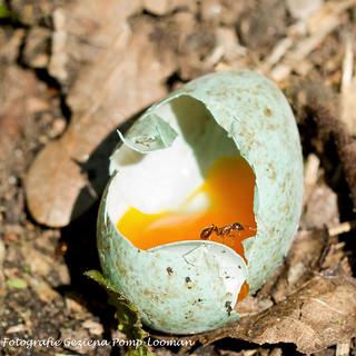 Fijne paasdagen / Happy Easter..  Explore!!