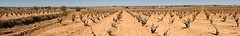 Viedo / vineyard (Siurell Blr) Tags: field vineyard vines panoramic panoramica campo vias viedo