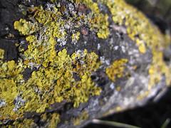 close up and macro MaureenAstrid 02 (MaureenAstrid) Tags: macro tree texture nature moss bark quartz macrophotograph