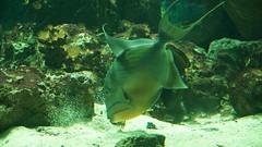 2014-05-10_16-15-12_ILCE-6000_DSC00221 (miguel.discart) Tags: animaux lige 2014 aquariumdelige