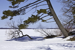 Into the Lake (awaketoadream) Tags: blue winter sky white lake snow ontario canada ice pine canon eos frozen eastern orillia 2014 couchiching 60d