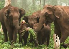 elephant wayanad