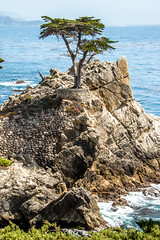 The Lone Cyprus Tree in Pebble Beach! Nikon D800E Dr. Elliot McGucken Fine Art Landscape & Nature Photography for Los Angeles Fine Art Gallery Show ! (45SURF Hero's Odyssey Mythology Landscapes & Godde) Tags: show california seascape tree art beach lens landscape ed photography for landscapes photo los high nikon raw gallery dynamic angle zoom angeles d dr fine wide cyprus wideangle malibu southern pebble socal lone mp mm nikkor elliot 36 range 800 hdr afs d800 the matix photomatix mcgucken f28g 1424 1424mm elliotmcgucken d800e elliotmcguckenphotograhy elliotmcguckenfineartphotographylandscapenaturearizonautaharchesnationalparkutahthedelicatearchdelicatearch