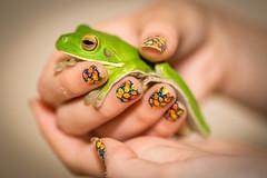 White Lipped Tree Frog (Litoria infrafrenata), Port Douglas Queensland, Australia (Sean Elliston) Tags: green rainforest wildlife australia amphibian tropical portdouglas farnorthqueensland whitelippedtreefrog canon5dmarkiii