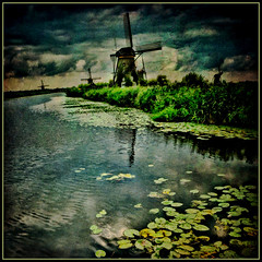Windmills and lillies (columbo's dad) Tags: holland texture windmills kinderdijk