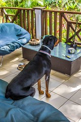 "Obi having a seat • <a style=""font-size:0.8em;"" href=""http://www.flickr.com/photos/91306238@N04/14388157339/"" target=""_blank"">View on Flickr</a>"