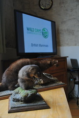 Wild Days Conservation - UK wildlife conservation and research holidays