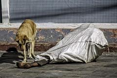 A Pound of Flesh (Culture Shlock) Tags: street nepal people dog men dogs bag outdoors sleep homeless kathmandu bags disadvantaged