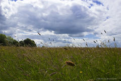 Field of Dreams (Smarkmith) Tags: blue england sky green english nature field grass clouds canon landscape eos rebel countryside roman fort britain country meadow meadows fields t3i d600 birdoswald 600d